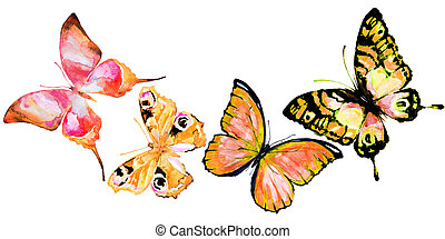 bonito, laranja, borboletas, isolado, ligado, um, branca