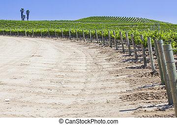 bonito, luxuriante, uva, vinhedo, com, sala, para, texto