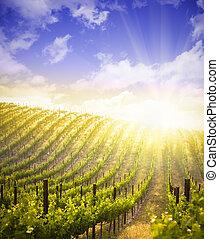 bonito, luxuriante, uva, vinhedo, e, céu dramático