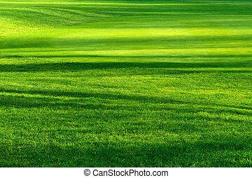 bonito, luz, gramado, sombras