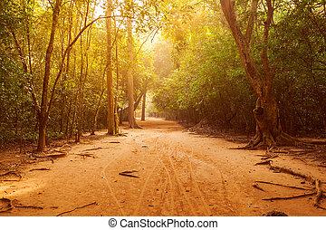 bonito, luz solar, através, selva, estrada, floresta
