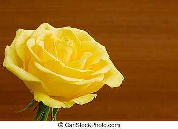 bonito, madeira, fundo, rosa amarela