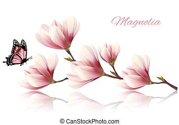bonito, magnólia, ramo, butterfly.