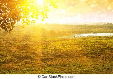 bonito, manhã, campo, névoa, amanhecer, vista