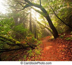bonito, manhã, em, luxuriante, floresta