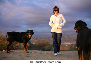bonito, mulher jovem, cães andando