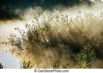 bonito, nebuloso, alvorada, sobre, outono, rio, névoa
