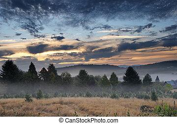 bonito, nevoeiro, paisagem, manhã