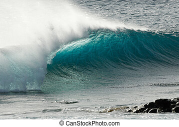 bonito, onda oceano