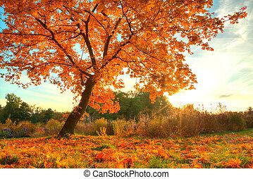 bonito, outono, árvore, com, caído, secos, folhas