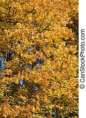 bonito, outono, árvore, folhas