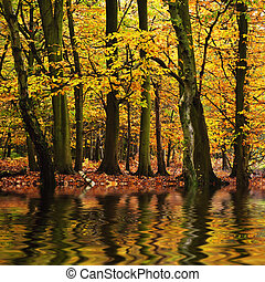 bonito, outono, estação, outono, refletido, n, cores água,...
