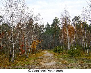 bonito, outono, forest.