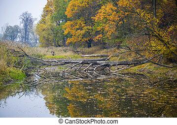 bonito, outono, lago, tempo