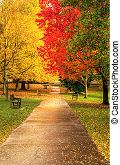bonito, outono, outono, cena, floresta