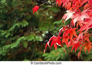 bonito, outono, outono, floresta, cena