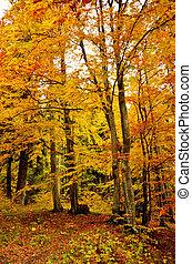 bonito, outono, outono, floresta, cena, com, vibrante, cores