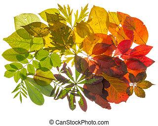 bonito, outono sai, coloridos