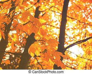 bonito, outono sai, park., coloridos