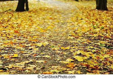 bonito, outono sai, parque, amarela
