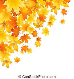 bonito, outono sai