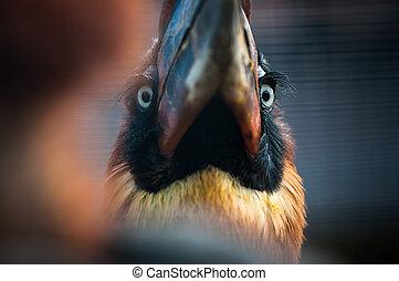 bonito, pássaro, sentando, uma filial