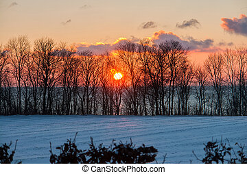 bonito, pôr do sol, árvores inverno, neve