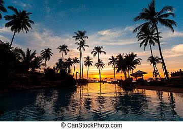 bonito, pôr do sol, com, coqueiros