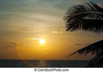 bonito, pôr do sol, com, palma
