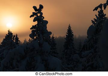 bonito, pôr do sol, em, inverno, floresta