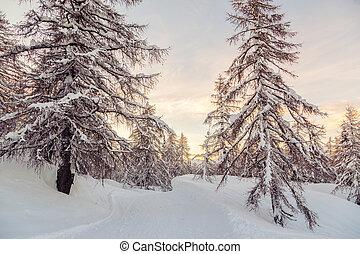 bonito, pôr do sol, em, inverno, floresta, jluia, alpes, em, slovenia