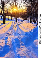 bonito, pôr do sol, em, inverno, parque