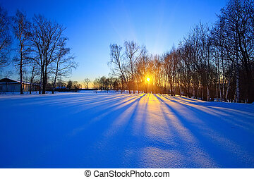 bonito, pôr do sol, em, um, inverno, floresta