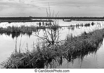 bonito, paisagem abstrata, com, árvores, e, lago
