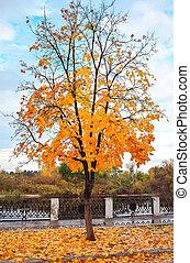 bonito, paisagem, com, outono, árvore, e, caído sai
