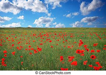 bonito, paisagem, com, papoula, meadow., composição, de, nature.