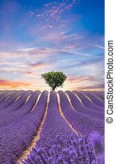 bonito, paisagem, de, florescer, cor campo alfazema