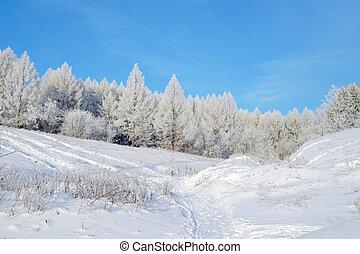 bonito, paisagem inverno