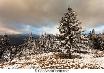 bonito, paisagem inverno, com, árvores cobertas