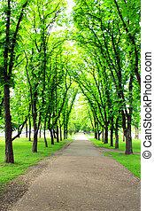bonito, parque, com, muitos, árvores verdes
