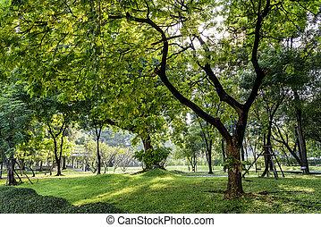 bonito, parque, primavera, ensolarado, tempo, dia
