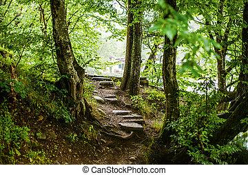 bonito, passos, magia, arborize caminho