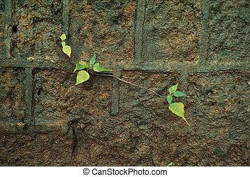 bonito, pequeno, planta verde, crescendo