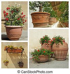 bonito, planta, grupo, imagens, tuscany, recipientes