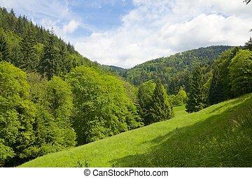 bonito, prado, floresta preta, romanticos, vista