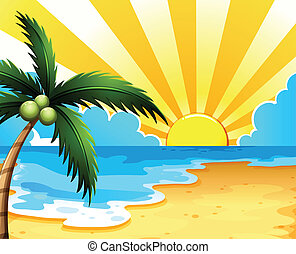 bonito, praia, árvore coco