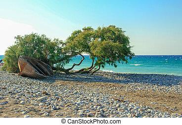 bonito, praia, árvore
