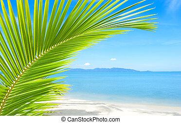 bonito, praia tropical, com, árvore palma, e, areia