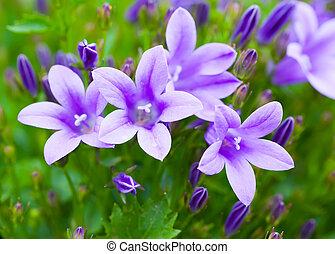 bonito, primavera, bouquet., fundo, campânula