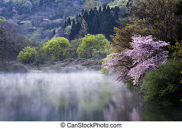 bonito, primavera, coréia, sul, paisagem